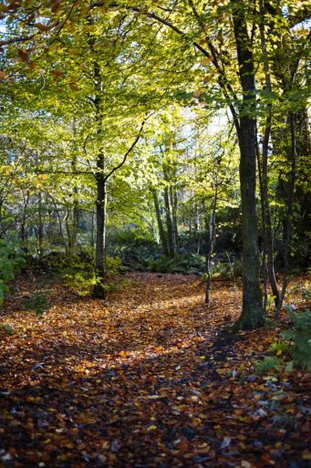 Finlaystone Estate Woodland