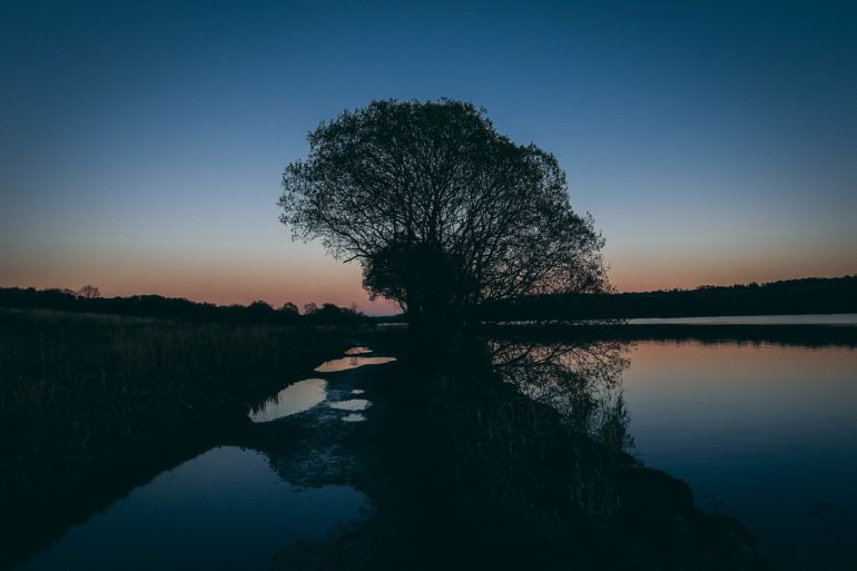 Tree at sunset at Castle Semple loch