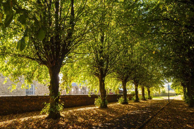 Lochwinnoch tree-lined street