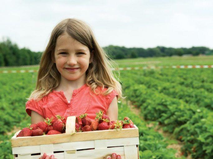 Kids Fruit Picking