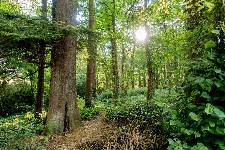 Houston Burn woodland