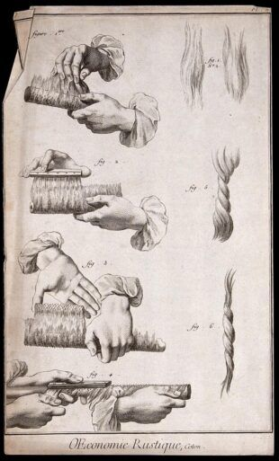 Textiles: cultivation and spinning of cotton. Engraving.